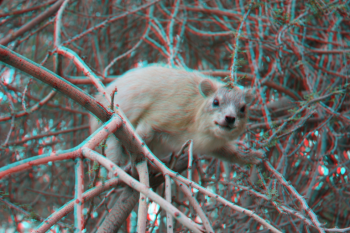 Free 3D Photo Maker: put on anaglyph glasses to see the picture